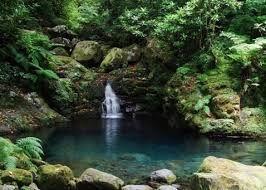 jardin tropical - Google Search