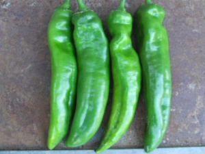 Como sembrar Pimiento de Cocinar en mi huerto | Huerto Las Monjas y Buena Vista Hato Rey
