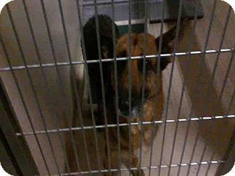 Bakersfield, CA - German Shepherd Dog. Meet A1046240, a dog for adoption. http://www.adoptapet.com/pet/17472207-bakersfield-california-german-shepherd-dog