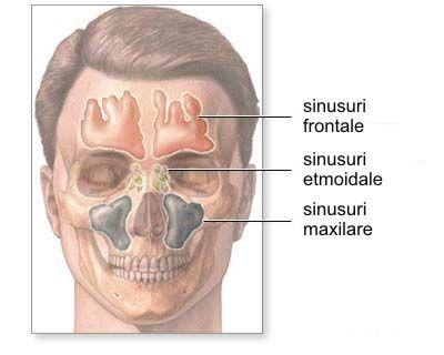 Citeste despre sinusul maxilar. Ai auzit de la medicul tau dentist ca in timpul extractiei dintelui s-a deschis sinusul maxilar si nu stii ce este acesta? Afla toate detaliile citind articolul.