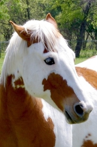Gorgeous Pinto horse! Looks like it is wearing eyeliner~