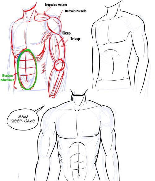 Unlike females, guys have flat chests (of course) and not much hip. Keep in mind guys stand differently from girls and their girls tend to be a part and do not curve inwards Drawing The Chest As an...