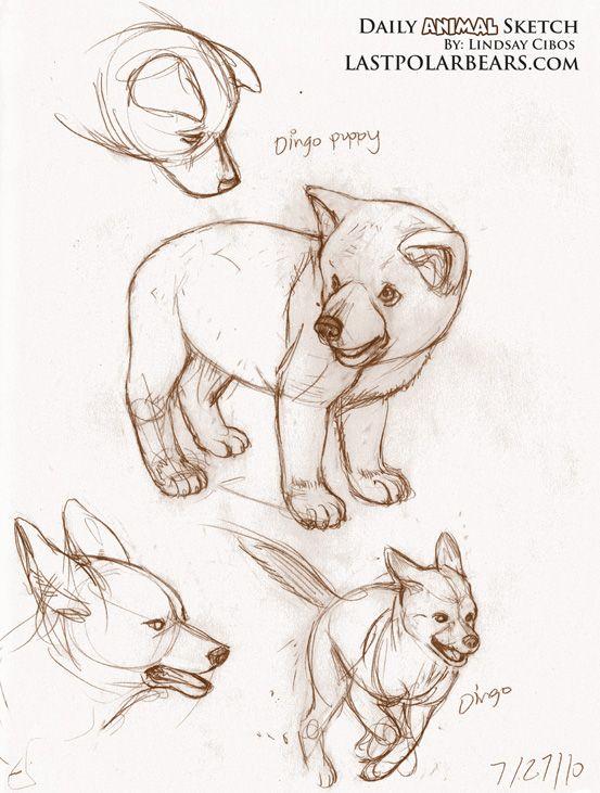 Daily_Animal_Sketch_007