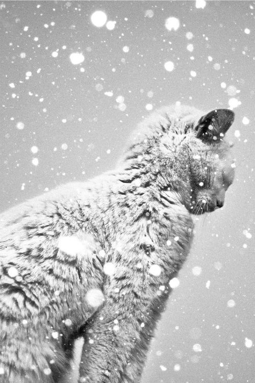 Winter Cat by Benoit COURTI