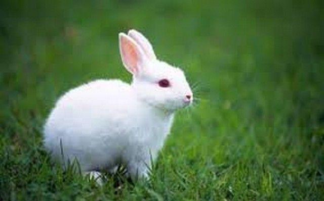 تفسير رؤية الأرنب في المنام او الحلم الأرنب الأرنب الابيض الأرنب في المنام الأرنب فيي الحلم Albino Animals Whats Your Spirit Animal Animals