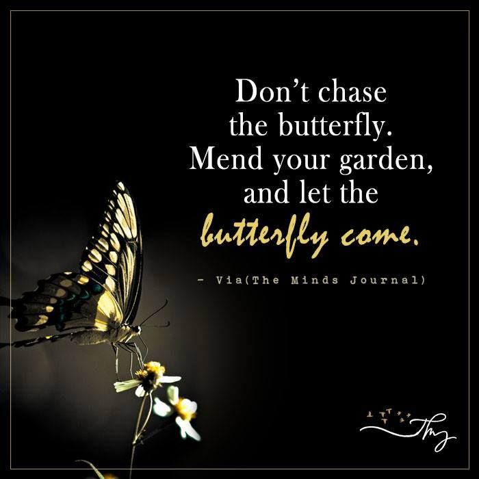 Don't chase the butterfly - http://themindsjournal.com/dont-chase-the-butterfly/