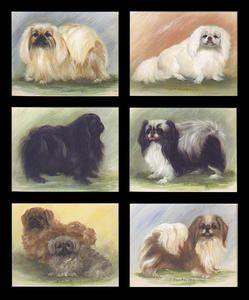 Pekingese Dog Breed Art Print Trade Cards | eBay