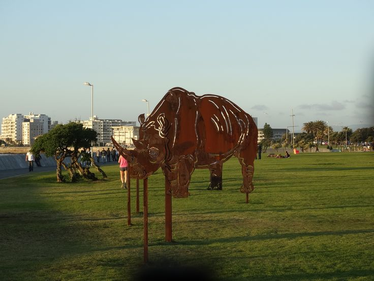 Rhino in the park #capetown #rhino