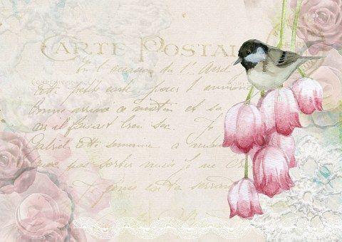 Bird, Postal, Post, Vintage