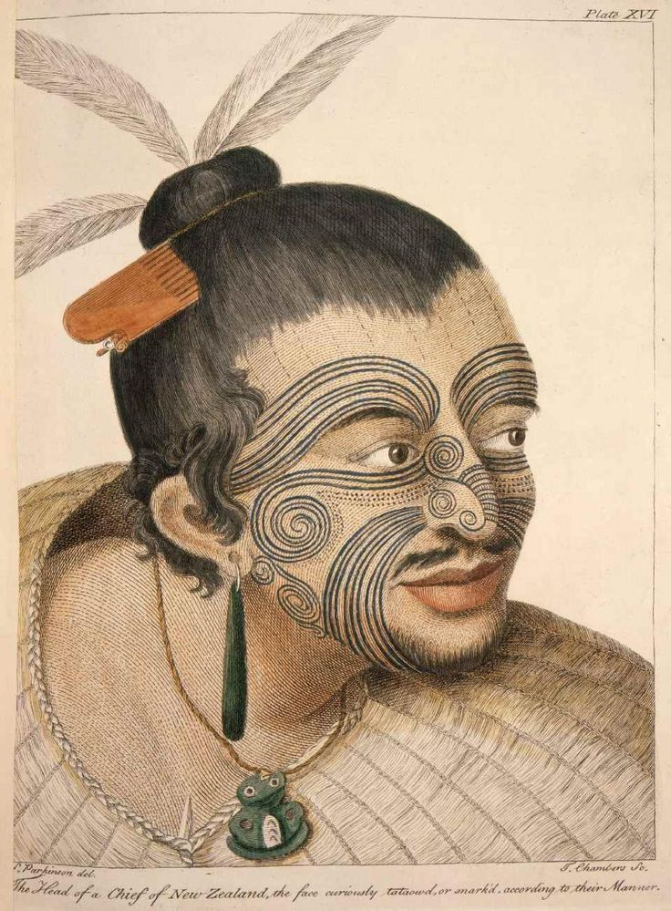 Māori man with hair in a putiki adorned with feathers and a wooden comb (heru). He has a facial moko, and two greenstone adornments; an earring and a hei tiki around his neck. There is also a flax cloak around his shoulders. Artist: Sydney Parkinson.