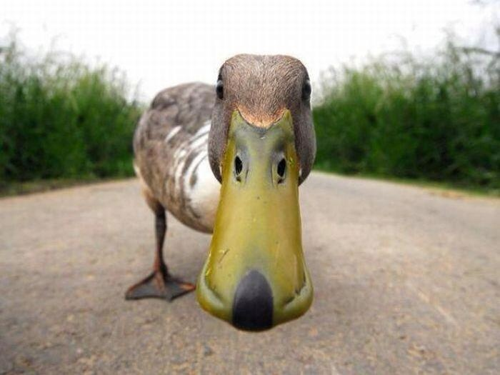 """""""You shall not pass!"""" said the guardian duck."""