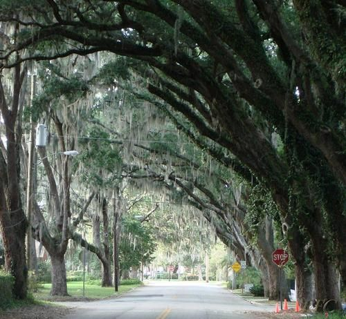 Beautiful Places In Florida To Stay: #livecolorfully Magnolia Street, St Augustine Florida