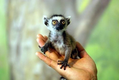 Пин от пользователя Sofya Potapenko на доске Lemur ...