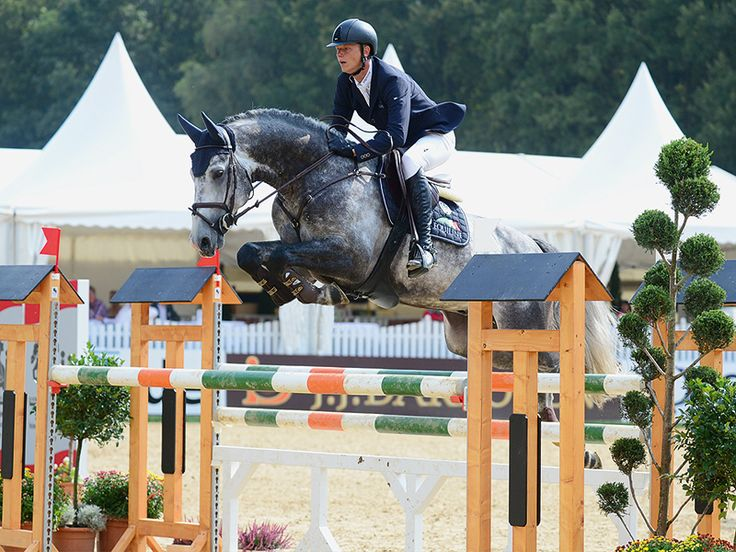 P.S.I. Auktionen | P.S.I. Auction | P.S.I. Catalouge 2014 | Show Jumping