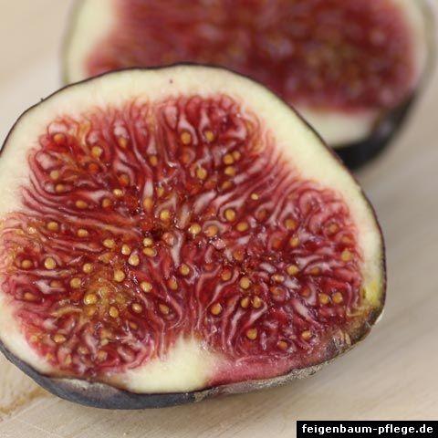 die besten 25 pfirsichb ume ideen auf pinterest wachsende pfirsichb ume pfirsich obstgarten. Black Bedroom Furniture Sets. Home Design Ideas