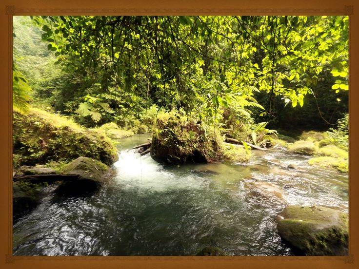 Manfaat hutan bagi kehidupan manusia diantaranya adalah menyediakan oksigen, menyediakan lapangan kerja, sumber obat-obatan. Baca artikel berikut!