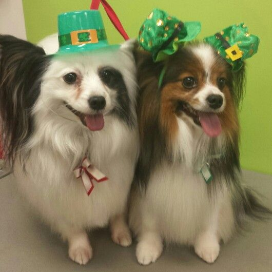 Riot & Ruckus. St Patrick's Day fun!