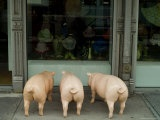 3 plastic pigs window shopping in New York (Prettier than Rundle Mall's xx)
