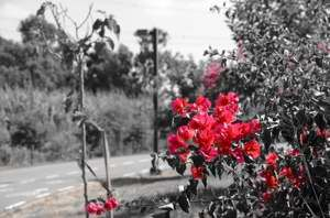 selective color tutorial for Nikon D5100