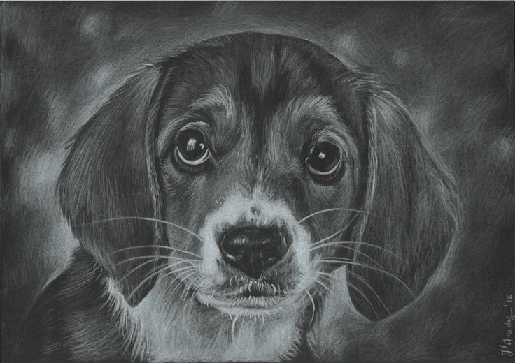 Puppy pencils drawing