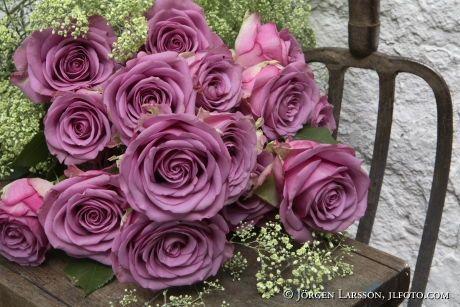 lila rosor - Sök på Google