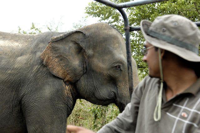 Visiting the wild #elephants at Udawalawe National Park in #SriLanka