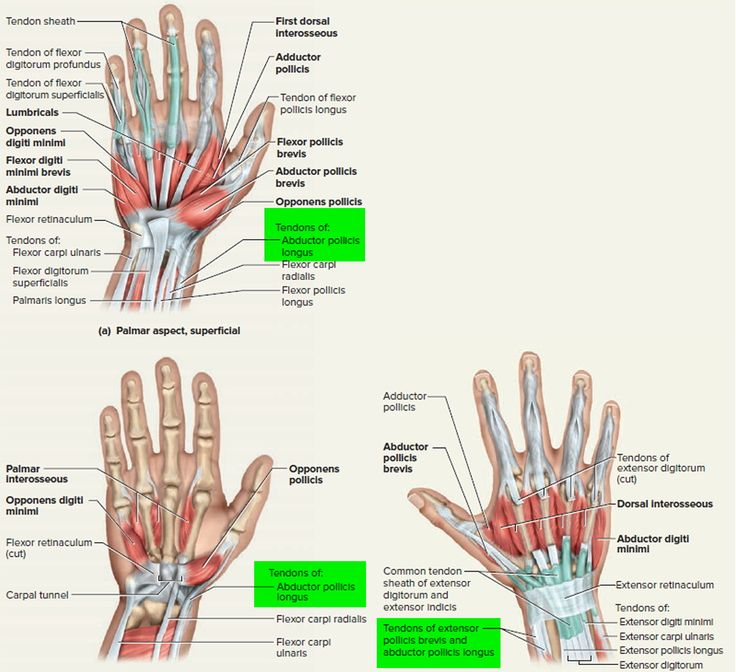 14 best anatomy pics images on Pinterest | Acupuncture, Body ...