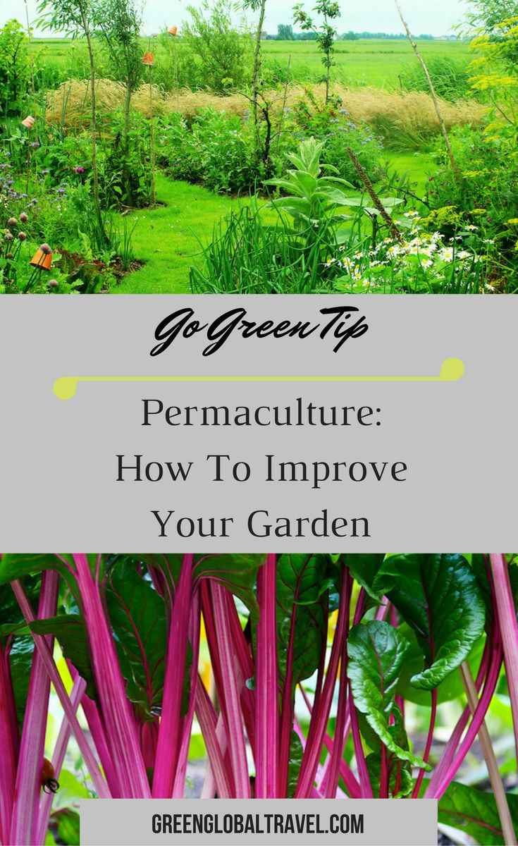 7 permaculture gardening techniques for you to try in your garden! | No-Dig | Keyhole Designs | Vermiculture Buckets | Chop-and-Drop Mulch | Companion Planting | Rotational Cropping | Green Manure |