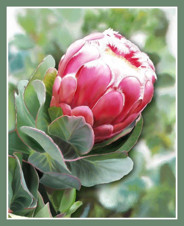 Protea Flower Done in CorelPainter by HelenParkinson