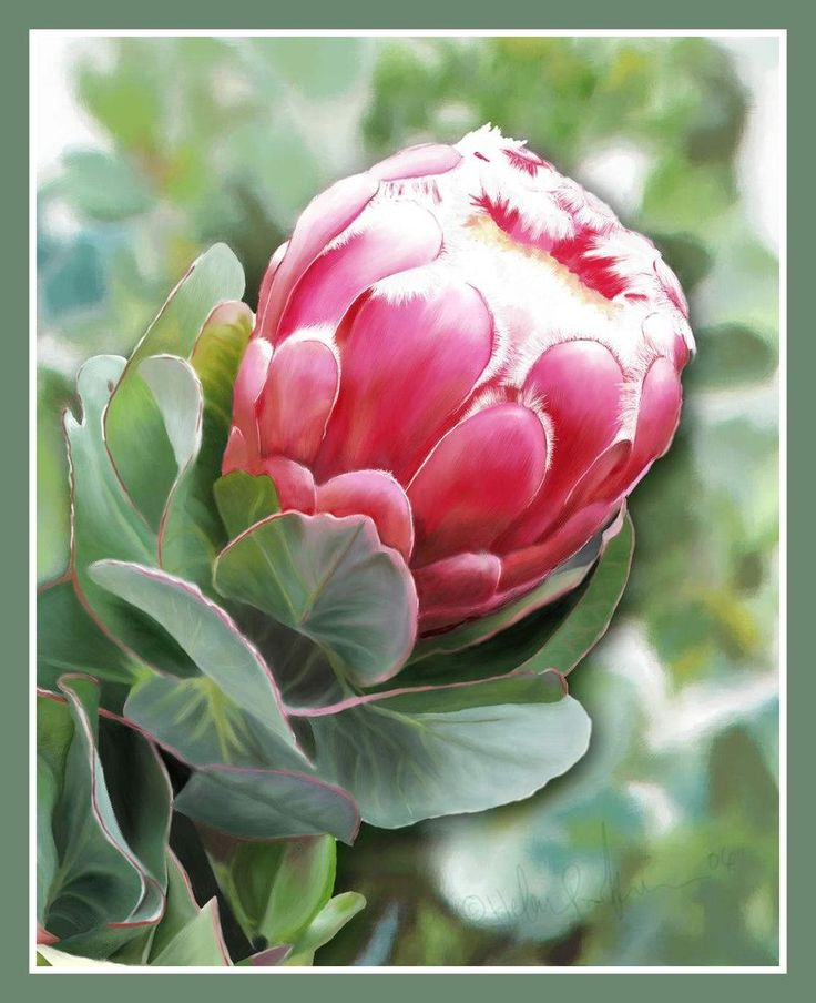 Protea Flower Done in CorelPainter by HelenParkinson