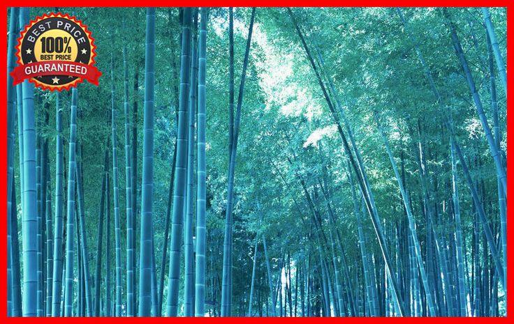 200+ Fresh Blue Bamboo Seeds With Instructions * Bambusa Chungii * HARDY & RARE #BlueBambooSeeds