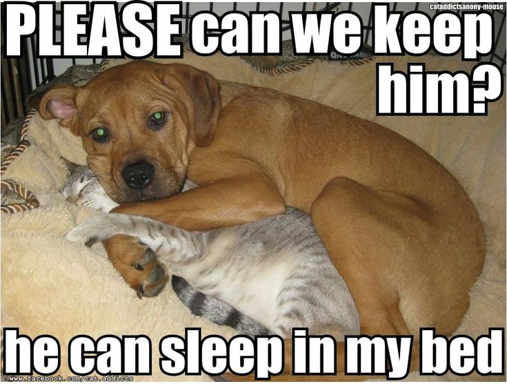 Adopt a Senior Pet month!!