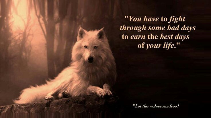 Image result for Inspirational Wolf Quotes