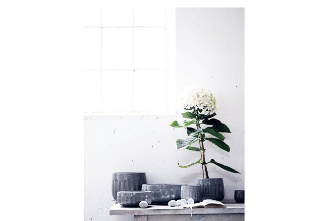 RUM - Indoor Plants