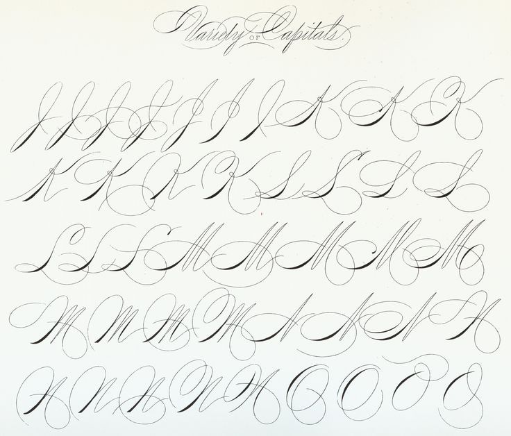 https://flic.kr/p/J49uS2 | Spencerian Capitals 1200 DPI 03