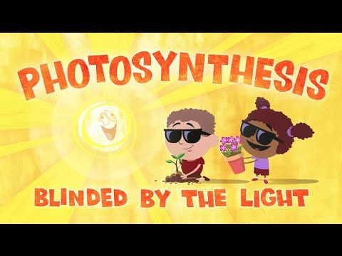 amoeba sisters cellular respiration and photosynthesis relationship
