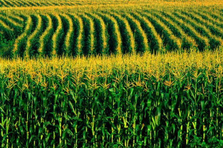 ÁCIDOS+HÚMICOS,+su+rol+en+mejorar+la+calidad+de+los+suelos+y+el+crecimiento+de+las+plantas