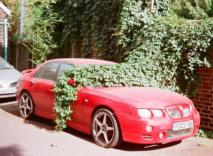 This car is slowly getting claimed as the summer progresses       #35mm #analog #shootfilm #filmisnotdead #landscape #instagood#instalove #filmphotography #필름 #フィルム #胶片 #필름사진 #フィルム写真#пленка #liveauthentic #car #nature