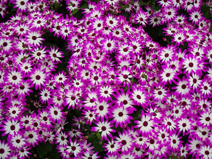 the  best small purple flowers ideas on   purple, Beautiful flower