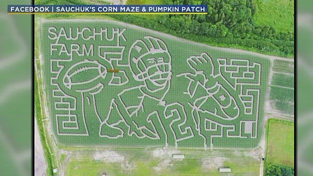 A local farm is honoring Tom Brady with a corn maze designed in his image.