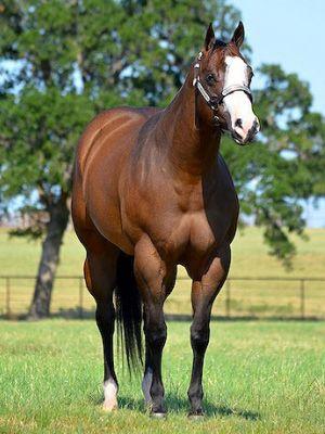 champion quater horses | First of Crundwell's quarter horses fetch $US1.64m - News - Horsetalk ...