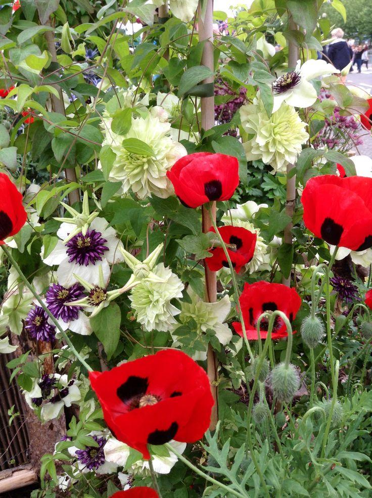 Gardeners World, NEC