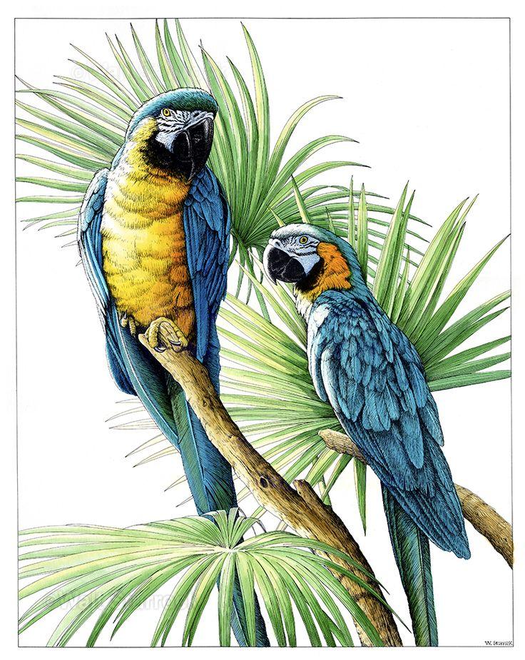 чаша тропическая птица рисунок плата, налоги, законы