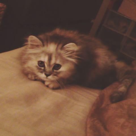 OUI JE SUIS GAGA hhahahaha désoler si vous êtes tanné de voir des photos de chat