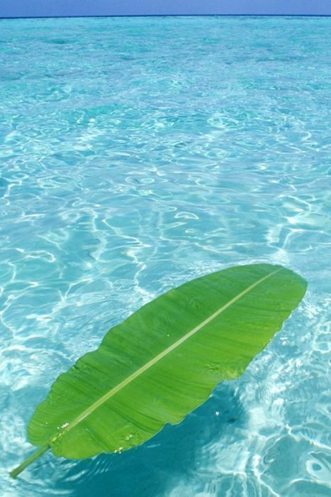 Floating tropical leaf...: