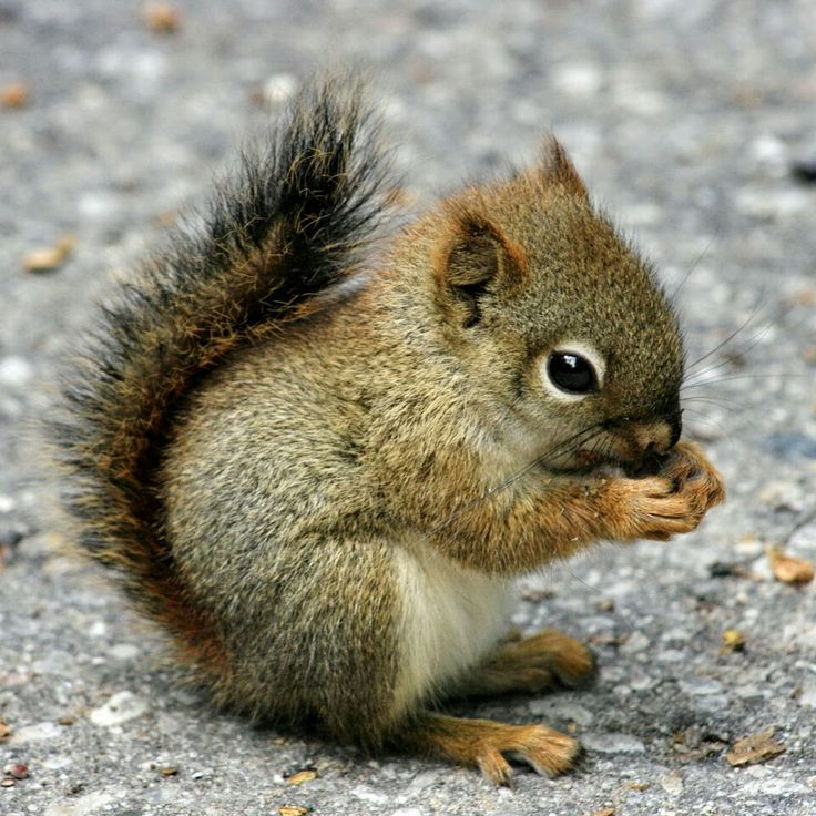 Baby squirrel                                                                                                                                                                                 More