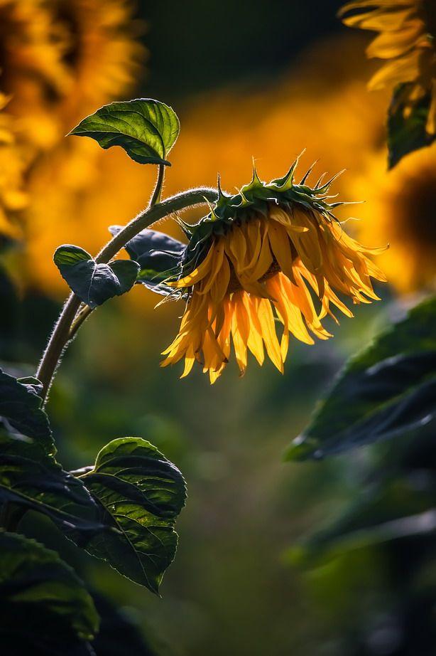 35PHOTO - Вячеслав Мищенко - Вчера их рисовало солнце,тонюсенькими кистями лучей.