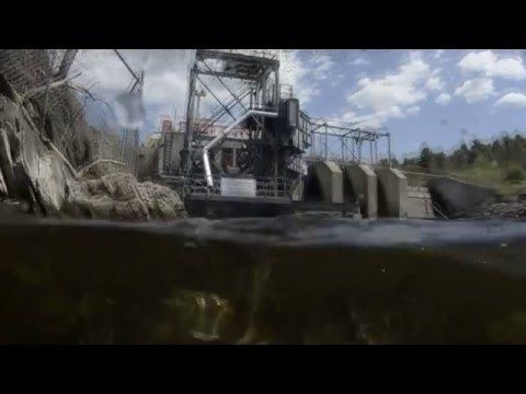 Not Just a Fish Tale: The Importance of Alewives in Maine Fisheries - YouTube