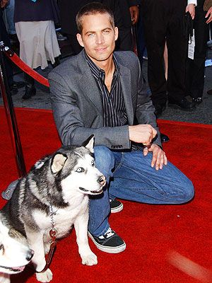 Paul Walker R.I.P - Paul Walker loved the ocean, cars and staying active. He was a family man, whose 15-year-old daughter, Meadow, moved from Hawaii to California so she'd be closer to her father. He dedicated much of his life to charity and, of course, his fans.  The Fast & Furious star, who died Saturday 10/30/13 in a car crash, also loved animals, a passion deeply documented on his social media accounts.