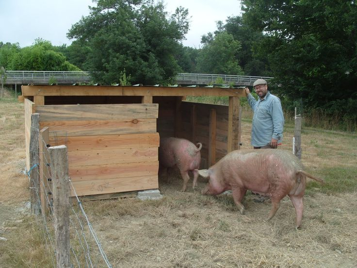 pig hut | Time to make the bed, with Max helping again. In goes a bale of straw ...